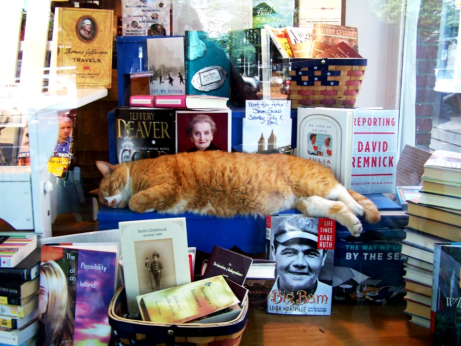 orange cat in the bookstore window; East Hampton NY; BookHamptons
